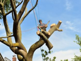 Davie tree removal services