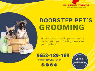 Pet Grooming and Pet Training Services at Home